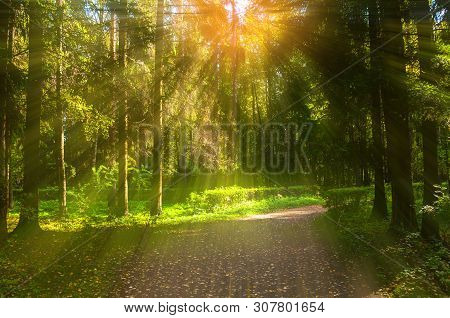 Autumn forest landscape with trees in the forest and fallen autumn leaves on the ground in sunny autumn weather. Sunny autumn forest nature
