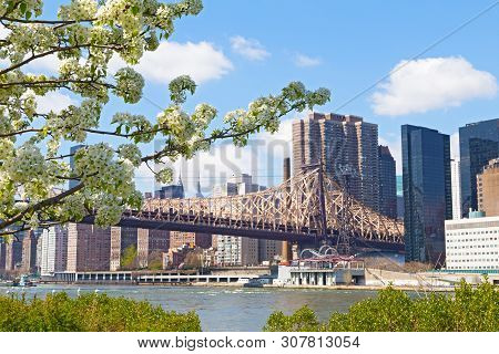 A View On Manhattan From Roosevelt Island In Spring Flowering Season, New York, Usa. Apple Flowers W