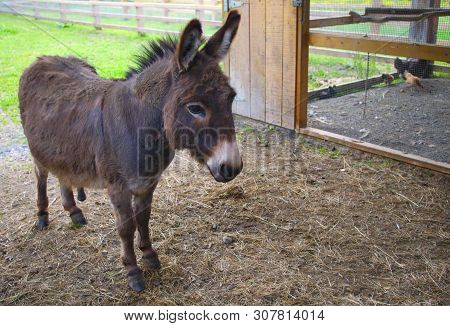 Donkey Jackass Farm Mammal Mule Domestic Animal