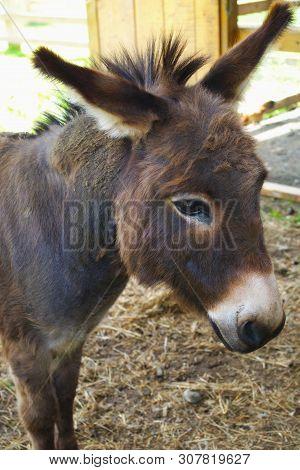 Donkey Jackass Farm Mammal Mule Domestic Animal Head