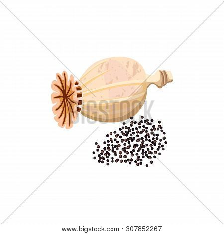 Dried Poppy Capsule And Seeds. Poppy Head Isolated, Ripe Poppy Seed Pod. Popie.