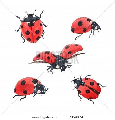 Beautiful Set With Hand Drawn Watercolor Ladybugs Ladybirds Illustrations