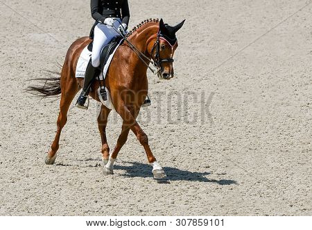 Dressage Horse And Rider In Black Uniform. Beautiful Horse Portrait During Equestrian Sport Competit
