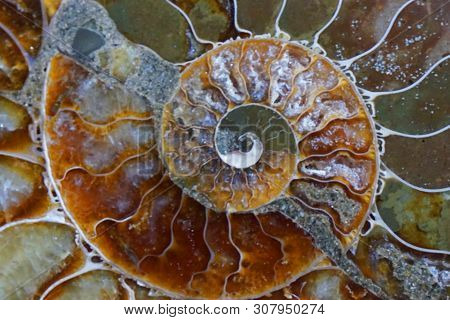 Ammonite Fossil Texture As Very Nice Natural Background