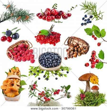 Collection of wild forest plants with berries , fruits , fungi , nuts  isolated on white background