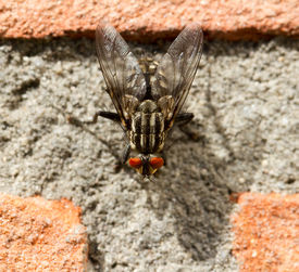 A Fly On A Brick Wall