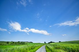 Road Between Green Fields In The Summer Under A Blue Sky In A Countryside