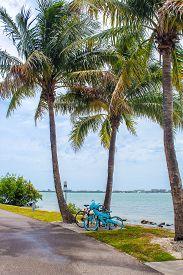Bikes Under The Palm Trees Just After A Starm At Bird Key Park - Sarasota, Florida