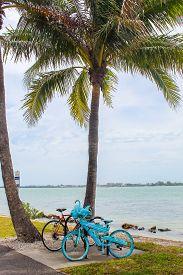 Blue Bike Under A Palm Tree At Bird Key Car Park - Sarasota, Florida