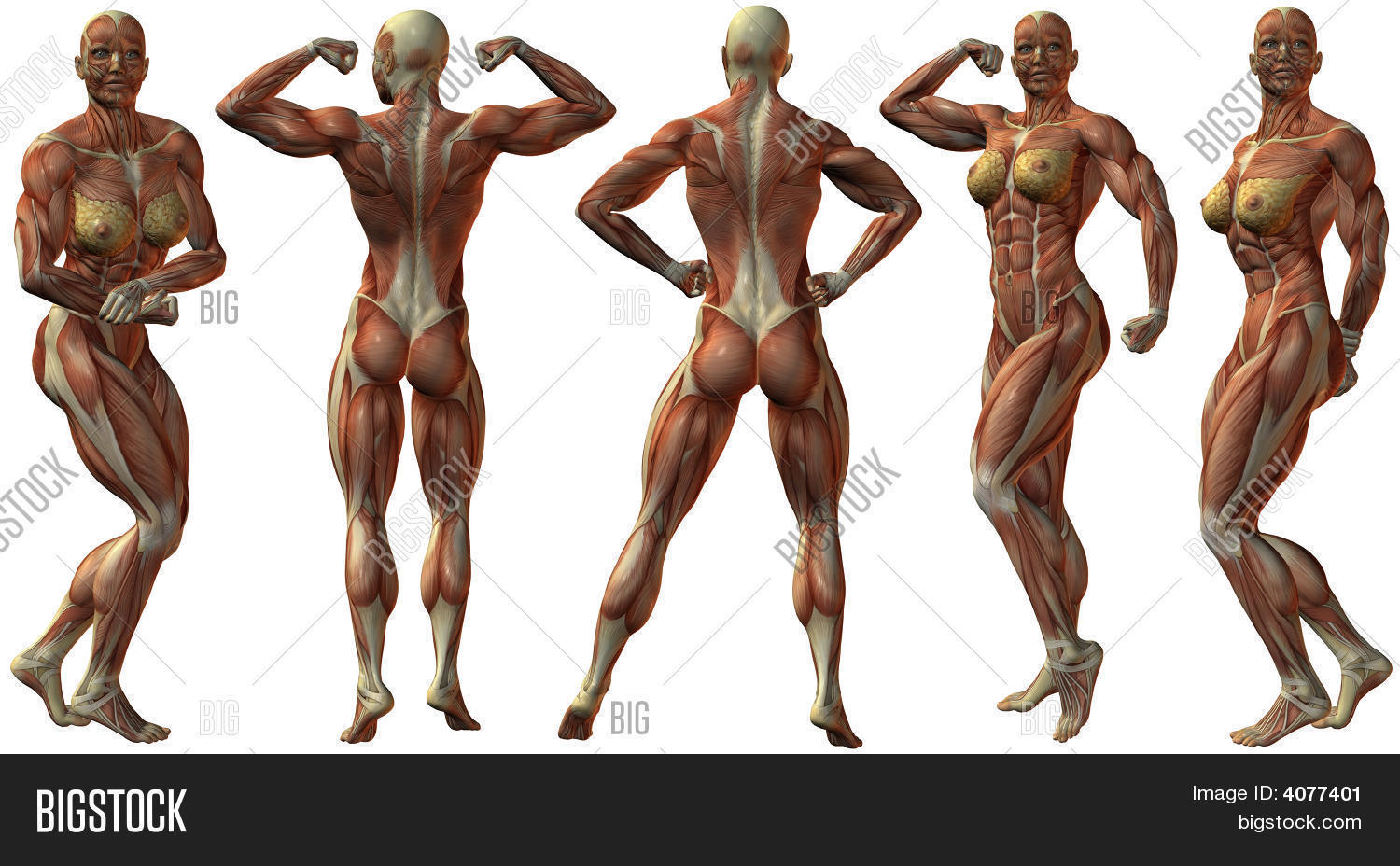 Female Human Image & Photo (Free Trial) | Bigstock