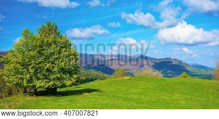 Tree On The Meadow In Mountains. Beautiful Nature Landscape On A Sunny Day In Spring. Fluffy Clouds