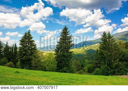 Summer Countryside In Mountains. Spruce Trees On The Grassy Meadow. Wonderful Weather With Fluffy Cl