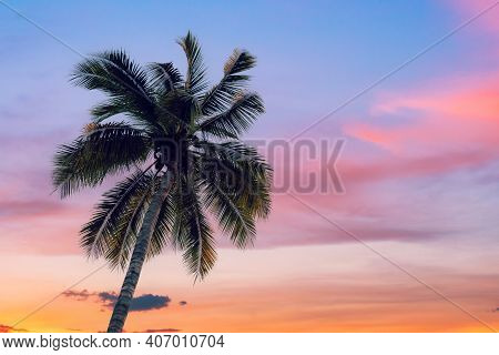 Coconut Palms Tree And Sky Clouds Twilight