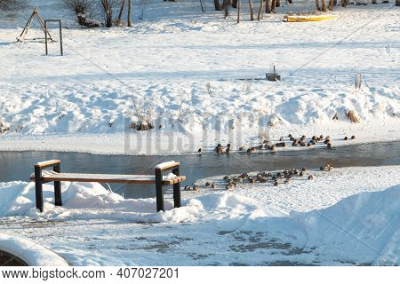 Sunny Winter Landscape By The River. Ducks In Winter On Ice