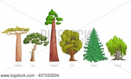 Different Green Trees Set. Cartoon Trendy Style. Baobab, Pine, Redwood, Oak, Spruce And Willow. Vect