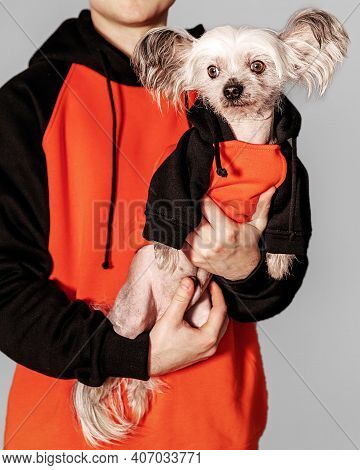 Closeup Portrait Of Cute Chinese Crested Dog Sitting On Owner Arms Looking At Left. Both Wear The Sa