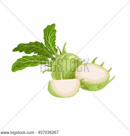 Kohlrabi Cabbages. Whole, Halved And Quarter. Illustration Of Fresh Farm Vegetables. Eco Turnip Cabb