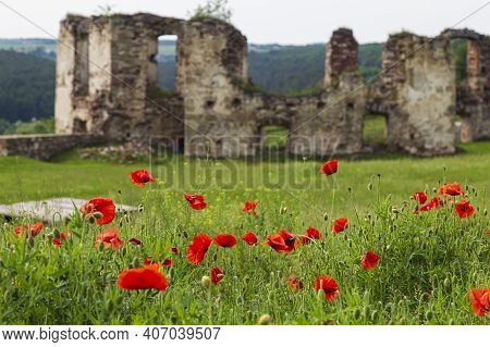 Ruins Of Medieval Castle Pidzamochok Among Red Poppies And Green Grass. Buchach Region, Ternopil Obl