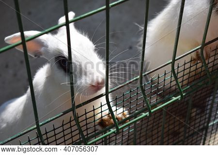 Black And White Rabbits In A Cage. Domestic Furry White And Black Spotted Farm Rabbits Bunny Behind