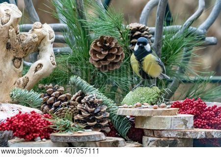 Great Tit Or Tit Stands On Moss, Looks Into The Camera. On A Natural Background, With Pine Cones, Re