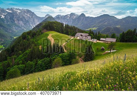 Stunning Spring Scenery With Colorful Various Alpine Flowers And Snowy Mountains In Background, Loga