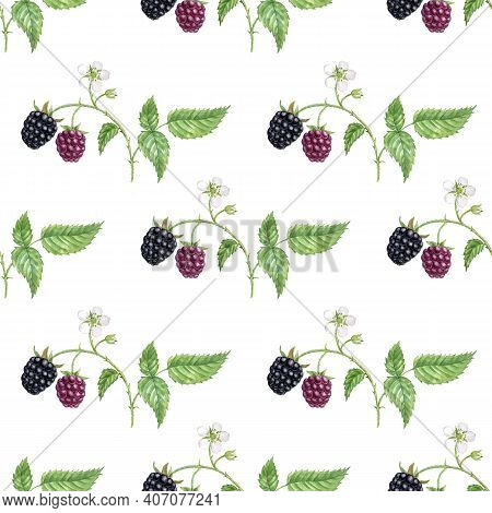 Watercolor Seamless Pattern With Drawing Blackberry, Leaves, Berries And Flowers At White Background