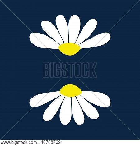Chamomile Daisy Set On Dark Blue Background With Isolated Chamomiles Daisies. Vector Illustration Ar