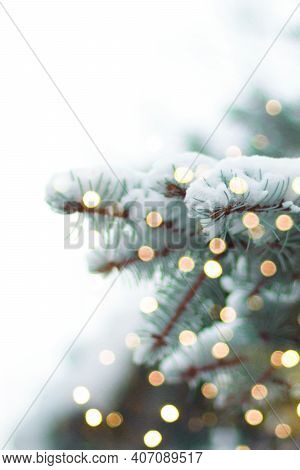 Christmas And New Year Holiday Background. Evergreen Green Spruce Branches With Festive Lights Garla