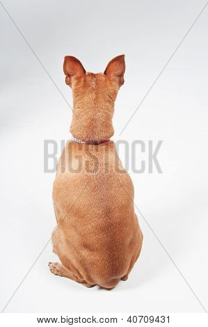 Rear View of a Dog Looking