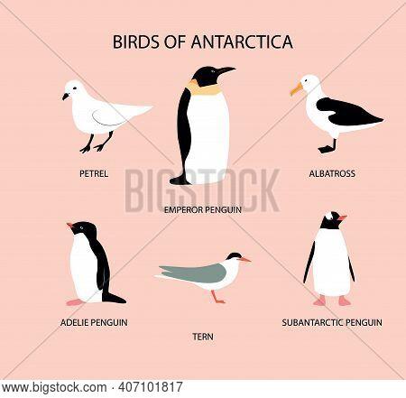 Vector Illustration With Birds Of Antarctica: Petrel; Emperor Penguin; Adelie Penguin; Tern; Albatro