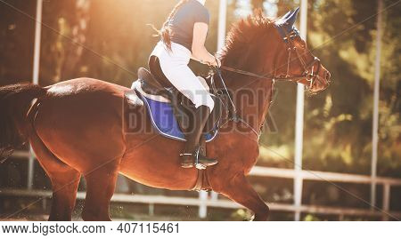 A Fast Strong Bay Racehorse With A Rider In The Saddle Gallops Through The Arena, Illuminated By The