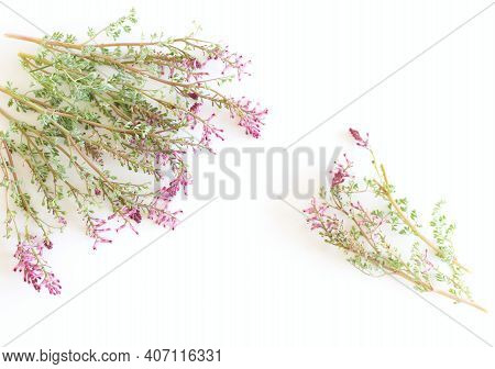 Fumaria Officinalis On A Wite Background.folk Medicine. Herbalists Use It To Treat Skin Diseases, An