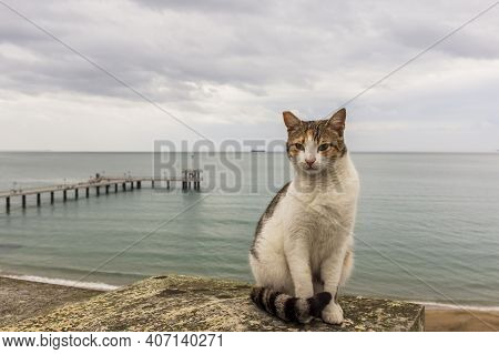 Cat Sitting On A Railing And Posing For A Photo Against The Backdrop Of The Sea.good-natured Street
