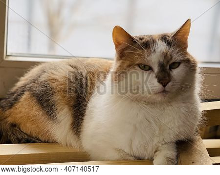 The Cat Is Resting Near The Window, At Home. Cute Cat Lies At The Window And Rests At Home On A Quie