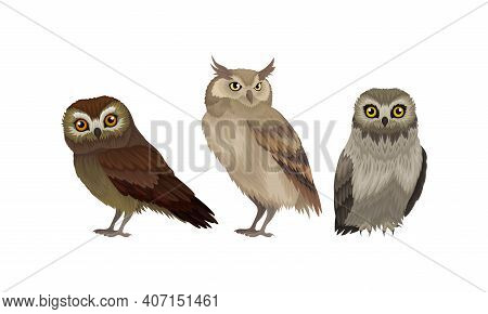 Different Species Of Owls As Nocturnal Birds Of Prey With Hawk-like Beak And Forward-facing Eyes Vec