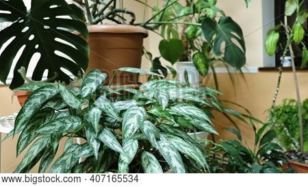 A Corner Of The Winter Garden In An Indoor Environment With Artificial Light With A Variety Of Deoci