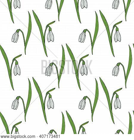 Seamless Pattern With Snowdrops On White Background
