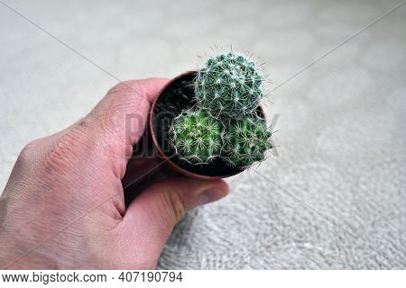 A Human Touches Prickly Cactus Plant, Cactus Plant And Prevent Radiation, Cactus Plant And Radio,