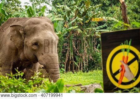 A Sumatran Elephant Beside A Don't Feed The Animals Sign