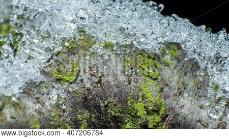 Crystals Of Melting Snow On A Branch Of A Tree Covered With Moss, Macro Photography In A Wild Forest
