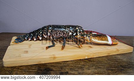Fresh  Lobster  Caught  Staring From The  Local Fisherman