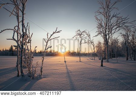 A Picturesque Image Of Winter Trees At Sunset. Stunning Northern Tundra With Colorful Sky Over Winte
