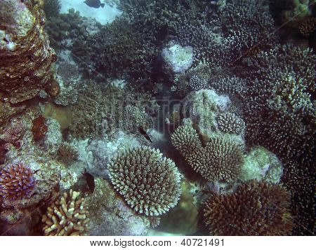 Tropical fish kingdom - coral reef in the maldivian sea