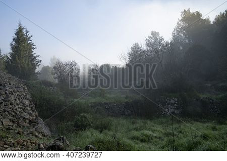 A Hazy Forest Scenery With Ancient Agriculture Terraces, In The Judea Mountains Near Jerusalem, Isra