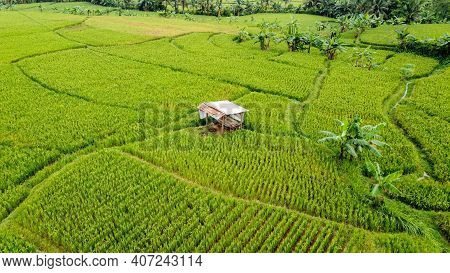 Aerial View Of Rice Fields On Terraced Of Cariu, Bogor, Indonesia. Indonesia Landscapes. Bogor - Ind