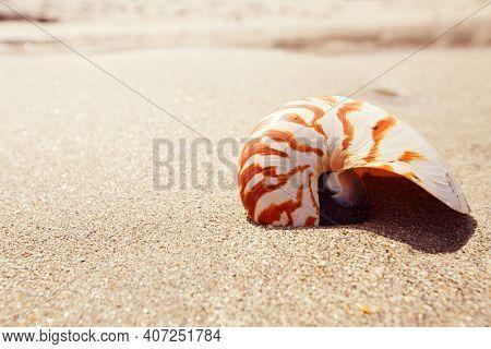 nautilus shell on golden  sand beach under soft sun light, shallow dof