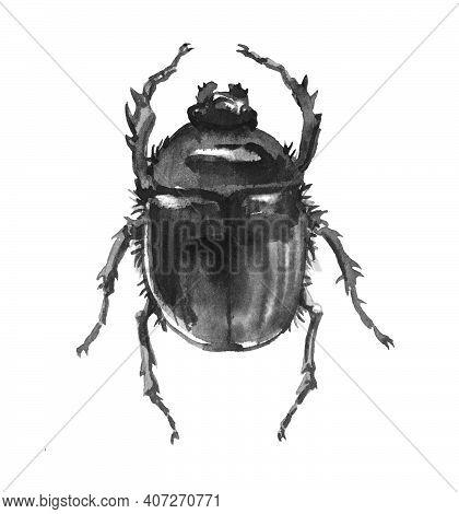 Dung Beetle, Scarabaeus, Ancient Egypt Sacred Symbol, Black Ink Illustration On A White Background I