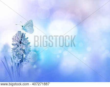 Blue Holly Butterfly And Hyacinth Purple Flower On The Turquoise Blurred Background. Floral Desktop.