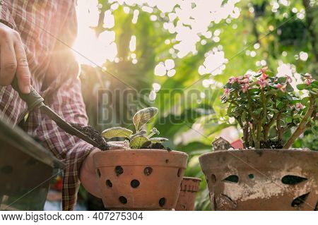 Asian Man Lifestyle And Outdoor Activity At Home. Home Gardening In Botanic Garden Alone.