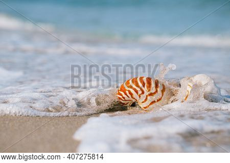 nautilus shell with sea wave,  sand beach  under the sun light, live action